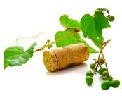 vino ecologico