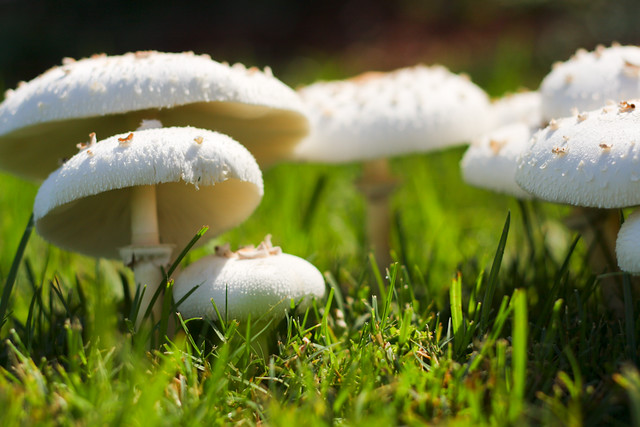 Mushroom Underneath