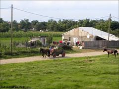Horse drawn cart in rural Romania (cod_gabriel) Tags: horses horse rural countryside dessin konst romania cart dibujo desenho disegno roumanie zeichnung tekening galope  teckning horsedrawncart rajz latara   menggambar caruta  ruralromania