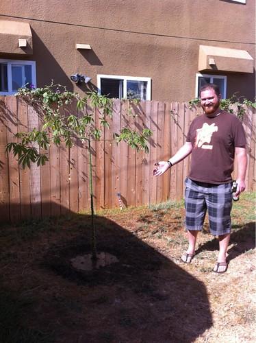 Crazy Dan Tree Day 2