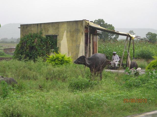 Last farmer in Tathawade