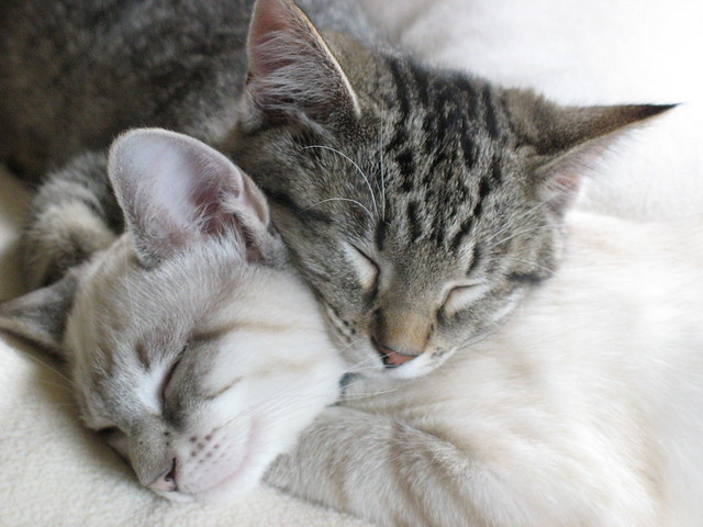Sisters make the best pillows