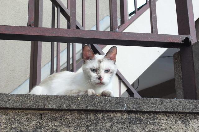Today's Cat@2010-08-30
