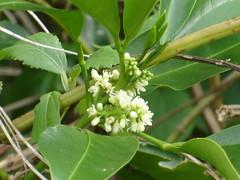 澳底的植物1-曹美蕾 攝