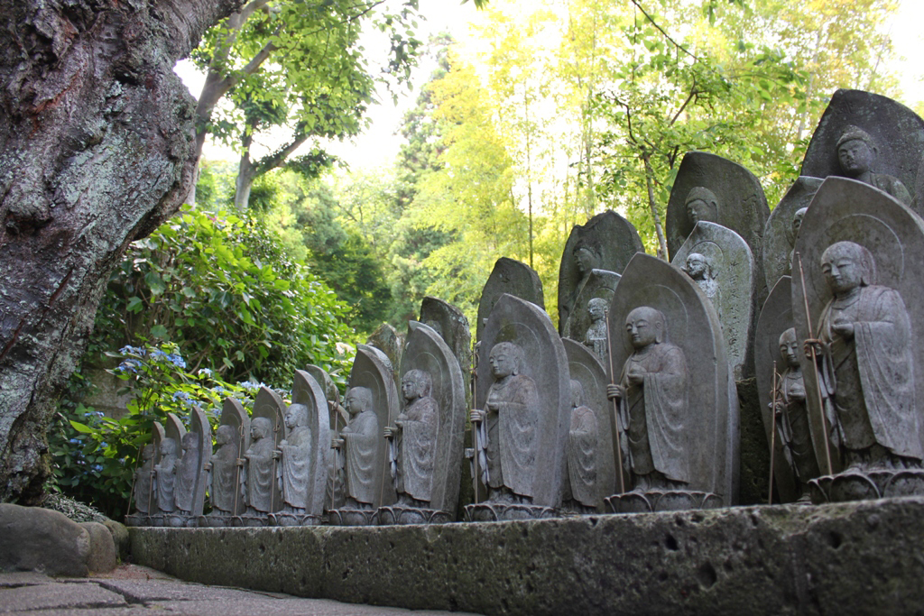 Hydrangeas - Exploring Hase, Kamakura part2 (7)