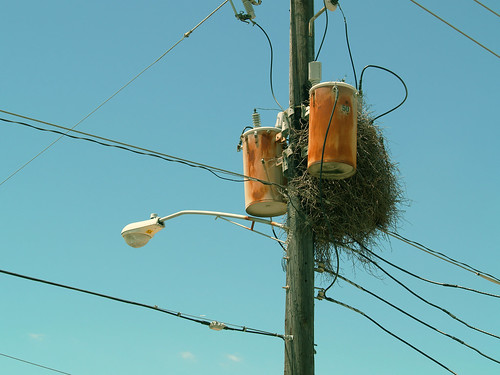 wild parrot nest 1