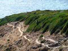 Le sentier sous le Monte di a Guardia et sa végétation pittoresque