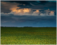 Soybeans at Sunset (glness) Tags: light sunset field minnesota iso400 farm f56 soybeans 70mm redrivervalley moorhead canonef24105mmf4lis 1125sec canon5dmarkii gregness