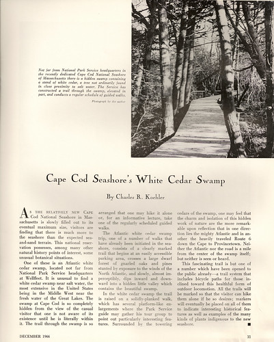 Cape Cod Cedar Swamp article