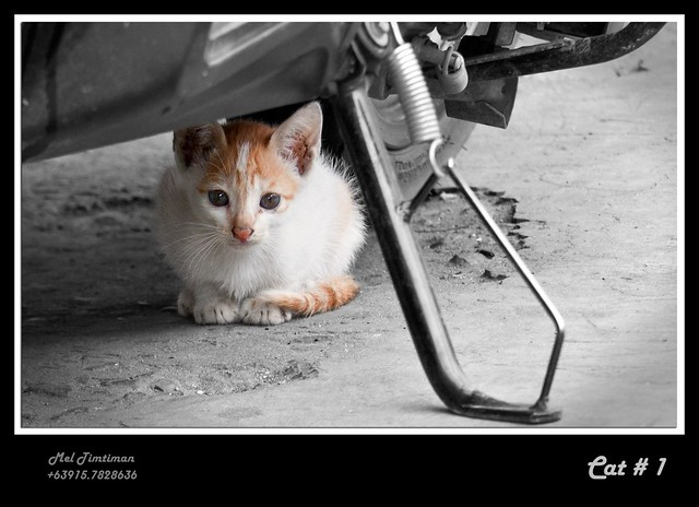 A cat under a motorcycle