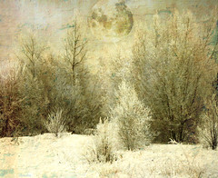 ___frozen moon___ (xandram) Tags: winter moon snow ice photoshop frozen textures tatot selectbestexcellence sbfmasterpiece