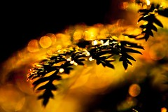 Leaf in the morning sun (Steve-h) Tags: ireland red dublin orange sun sunlight black green nature sunshine yellow gold leaf bokeh riverbank platinumheartaward canoneos5dmkii canoneos5dmk2 canonef100mmf28lmacroisusm tripleniceshot mygearandme mygearandmepremium mygearandmebronze mygearandmesilver mygearandmegold mygearandmeplatinum mygearandmediamond