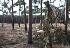 [cea] Elvenbank (Cea.) Tags: mushroom elves