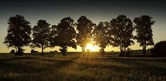 7 (tobias-eger) Tags: sunset sun summer trees shadows nature landscape tree light landschaft bäume sonnenuntergang sommer schatten blackforest schwarzwald canon