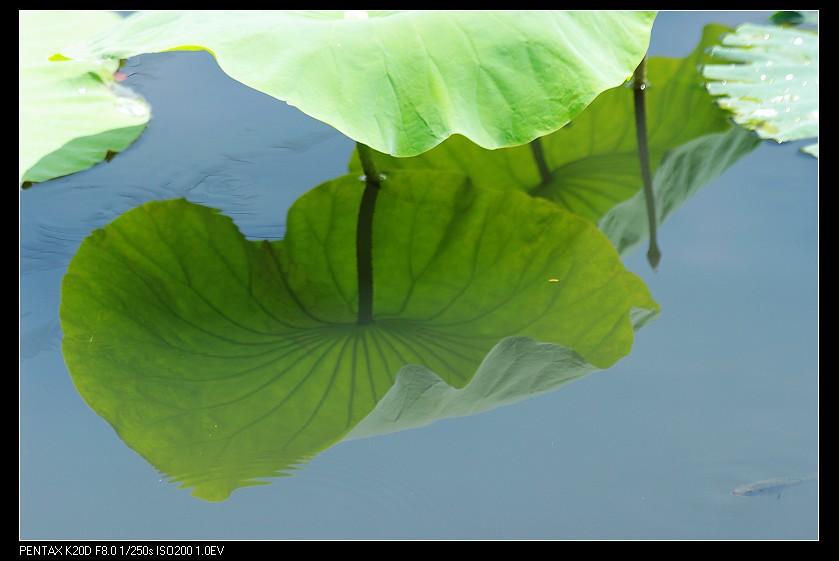 2010/06/26 Pentax F 70-210/4-5.6 ED 之相招拍荷趣!