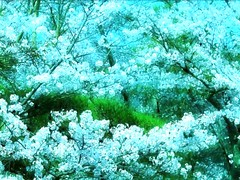 Impressionism (Hopeisland) Tags: old pink flowers blue trees plant tree green nature japan cherry temple spring kyoto blossoms april sakura cherryblossoms colourful tojitemple      4