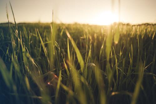 [フリー画像] 自然・風景, 草原, 朝日・朝焼け・日の出, 201006300700