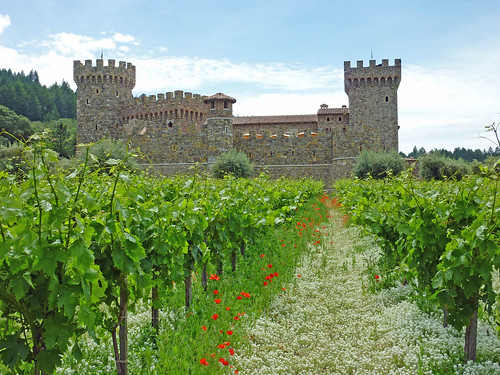 Vineyards in front of the Castello di Amorosa