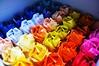 My Technicolour Roses :)