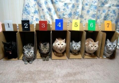 收納貓咪2