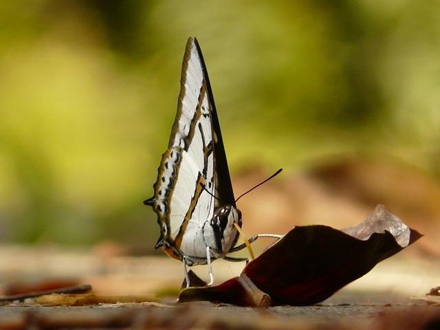 翡翠水庫---熱夏蝶之物語