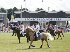 Trotting (Elrenia_Greenleaf) Tags: show horse club royal games highland pony mounted 2010 ingleston