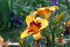 flower garden 133