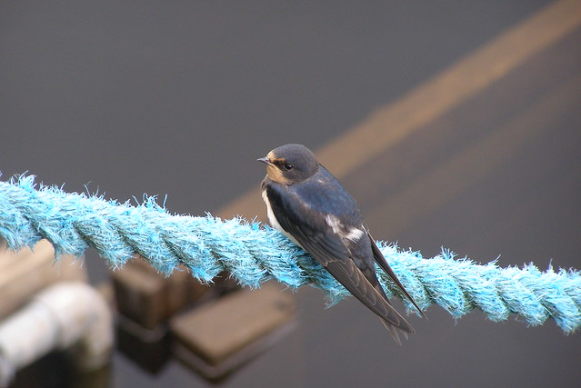 Bird on a rope
