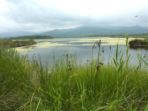 Nord de l'étang de Palu