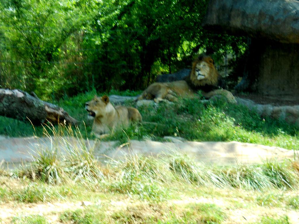 Zoo2010_014