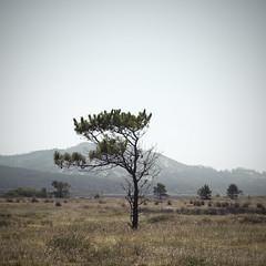 F (Sabela Eiriz) Tags: blue summer cloud mountain tree verde green beach azul garden naked landscape arbol playa paisaje m galicia half verano campo otoño minimalism montaña viñeta medio nube mitad desnudo ramas minimalista sabela auttum corrubedo eiriz pezgata