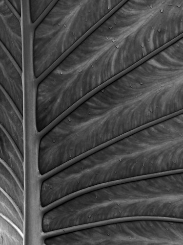 Veined Leaf