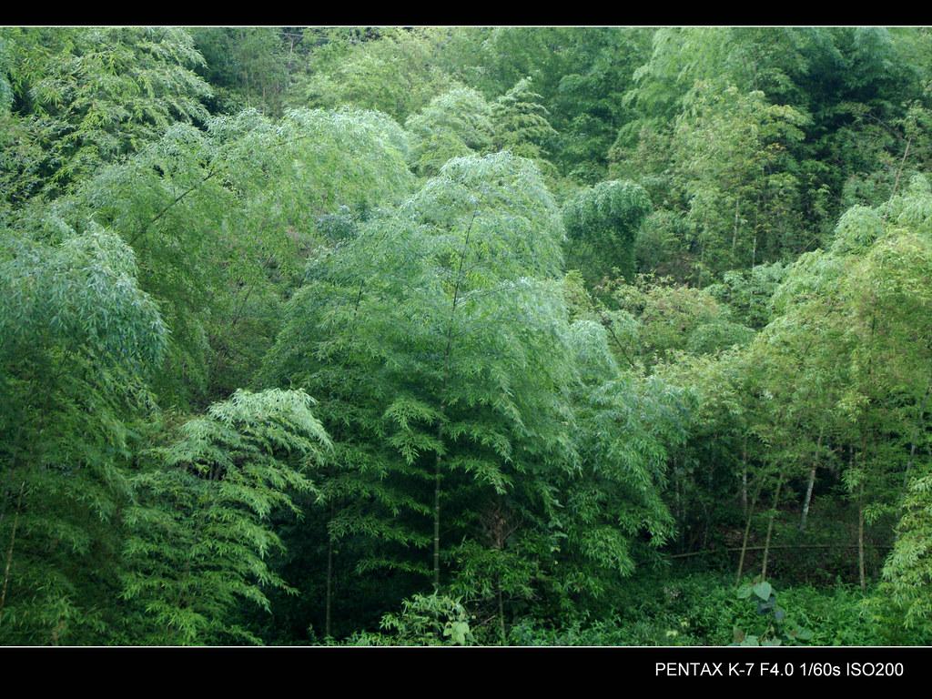 山上的綠令人神往 (圖多)