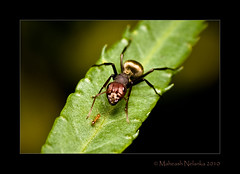 Meet the GiAnt (Maheash Nelanka) Tags: macro closeup canon ant sri lanka tiny ants srilanka ceylon tamron 90mm meet diffuser tamronspaf90mmf28di 400d 430exii maheash nelanka canon430exiispeedlite