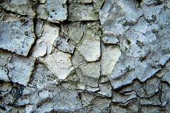 dry (Daniel Kulinski) Tags: life macro texture ex closeup one 1 still image zoom bokeh samsung surface enlarge magnify proximity closer ex1 approximation samsungimaging samsungex1
