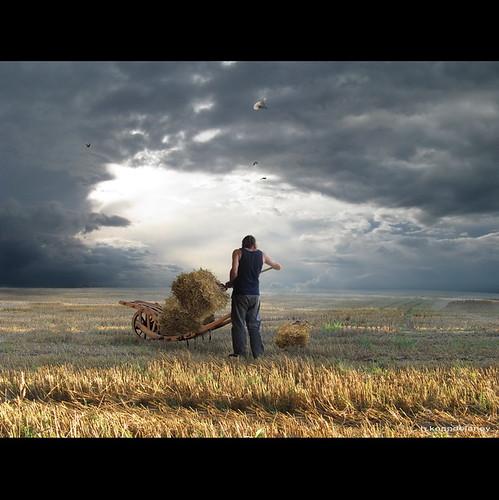 Farmer at Harvest