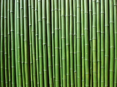 Bamboo (keithmaguire ) Tags: park wood color colour verde green asian zoo colorful asia asien groen south si grand korea vert bamboo korean seoul asie colourful grn southkorea  aasia asya zielony  hijau zoos zoology  azia azi core  corea yeil sia  berde sdkorea  selatan   coreia    chu xanh coreadelsur   hnquc        zsia      gneykore
