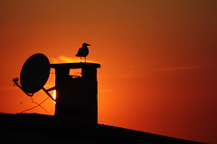 seagull and sunset (H e r m e s) Tags: roof sunset red orange sun silhouette yellow abend seagull istanbul möwe avening