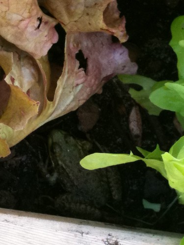 Can You See The Frog?!