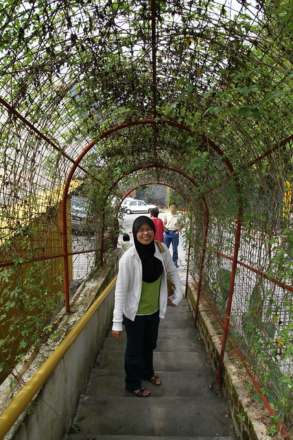 Honeymoon-Cameron Highland