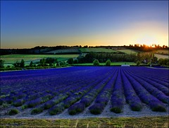 SUNSET in the DARENTH VALLEY (mickeydud) Tags: sunset england nature landscape landscapes countryside kent nikon village lavender british cultures naturalworld lullingstone villagelife naturesfinest darenthvalley beautifulcapture challengeyouwinner d700 naturephotoshp naturewatcher worldwidelandscapes landscapesdreams natureselegantshots naturallyblue naturethroughthelens thechallengefactory floresporlapaz naturescreations mickeydud naturesprime storybookwinner afs~nikkor~24~70mm~f28g~ed lullingstonelavender