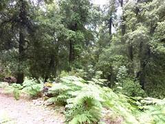 Sentier de descente de Caprunale : dans la forêt d'Omita