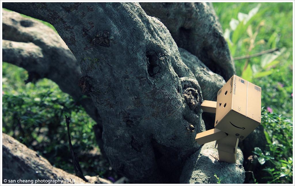 阿楞爬樹記