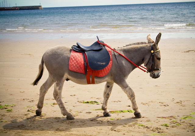 040710_ Donkey on the beach