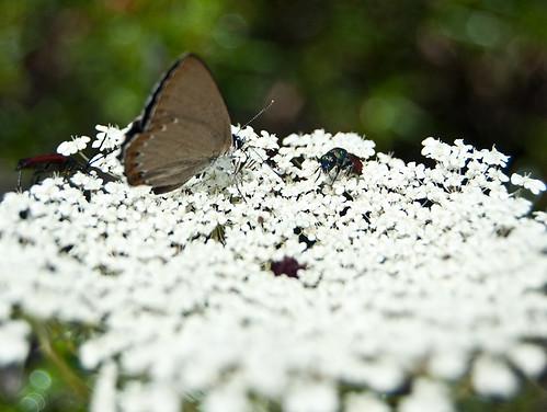 La lucha por el néctar