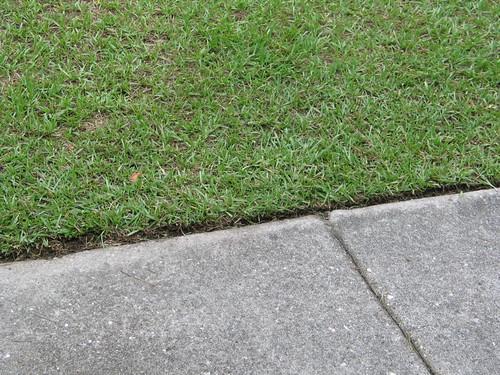 Freshly mown grass...