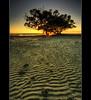 The Ripple Effect (danishpm) Tags: trees yellow sunrise canon sand australia brisbane mangrove qld ripples aussie aus hdr manfrotto nudgeebeach eos450d 450d sorenmartensen hitechgradfilters 09ndreversegrad austaliansuburbs