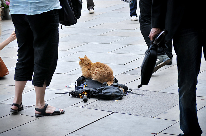 James and Bob the Big Issue Cat