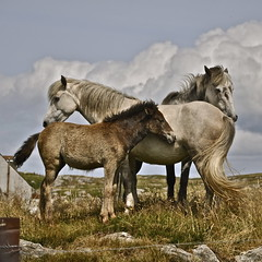 Together (petelovespurple) Tags: horses white nikon together 1001nights barra westernisles foal d90 plp barraigh cocklestrand platinumheartaward plantecheval mygearandmepremium mygearandmebronze mygearandmesilver mygearandmegold mygearandmeplatinum mygearandmediamond ringexcellence dblringexcellence flickrstruereflection1