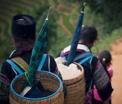 Sur le chemin des Hmongs